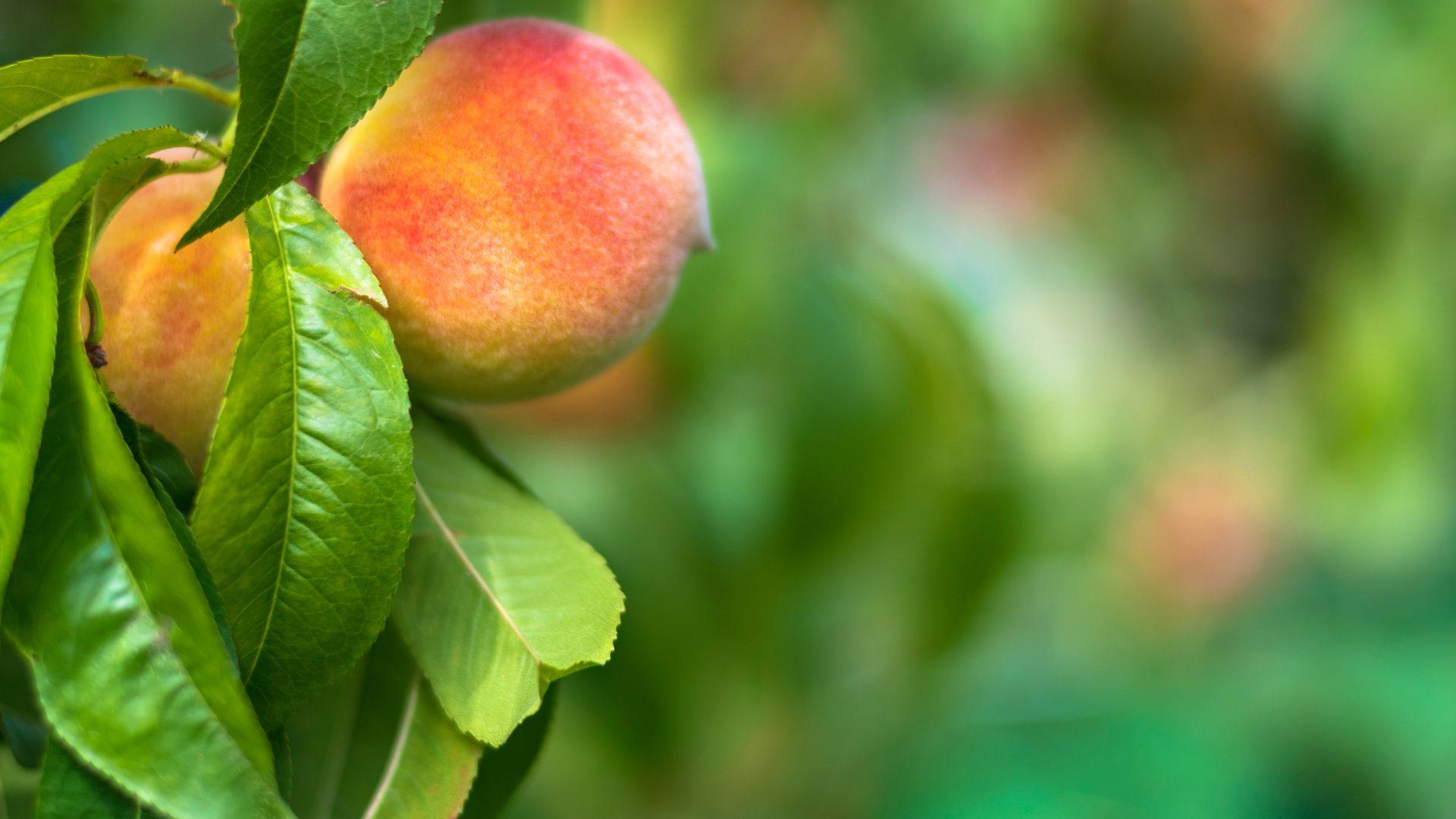 La fertilización foliar como complemento nutricional en una explotación.