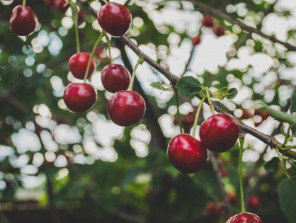 Cómo reducir el estrés de las plantas en una explotación frutícola mediante correctores.
