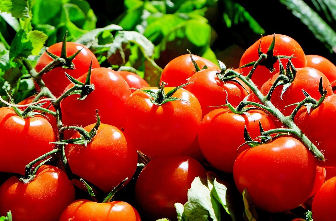 Estimula las defensas naturales de los cultivos hortícolas.