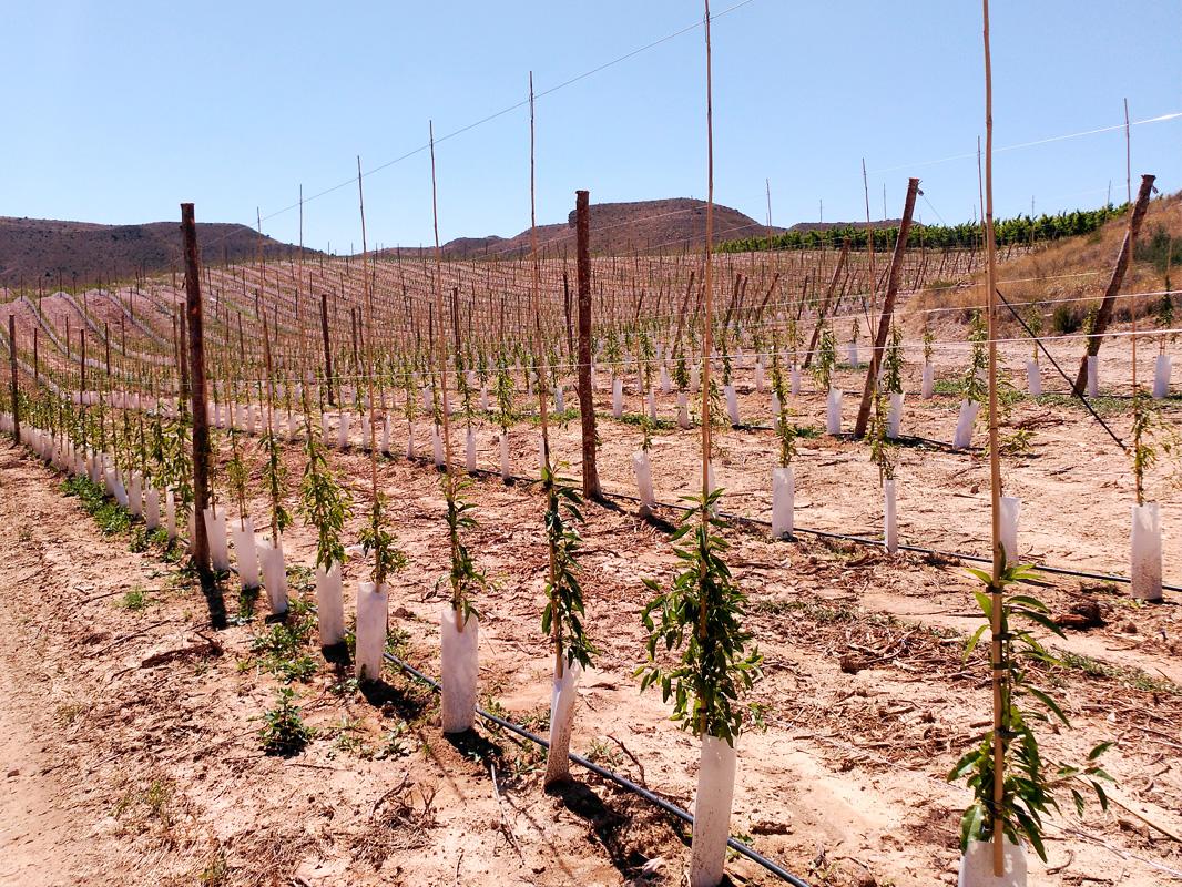 Cómo estimular el enraizamiento en plantaciones jóvenes.
